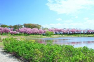 飯森山公園の風景