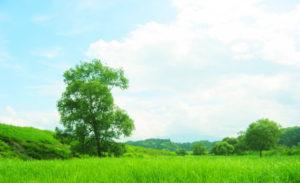 大蔵村の草原