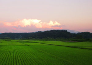 大蔵村の田園風景