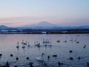 鳥海山の遠景 真室川町