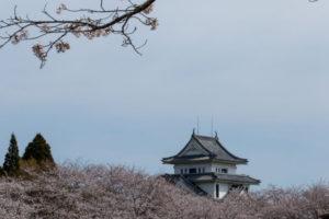 高岡城と桜