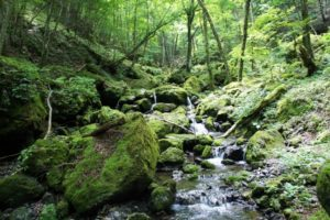 御巣鷹山の自然