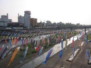 加茂川の鯉のぼり