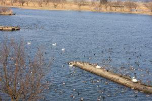 瓢湖の風景