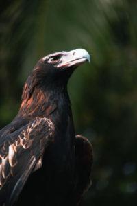 知内町のシンボル 鷹