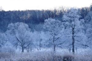 更別村 霧氷の風景