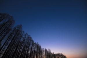水元公園 メタセコイアと夜空