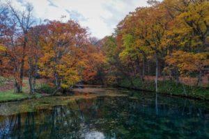 鳥沼公園の風景