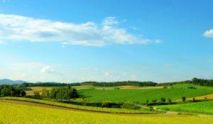 美瑛町の自然風景